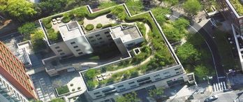 Sel riski yeşil çatılarla azalacak