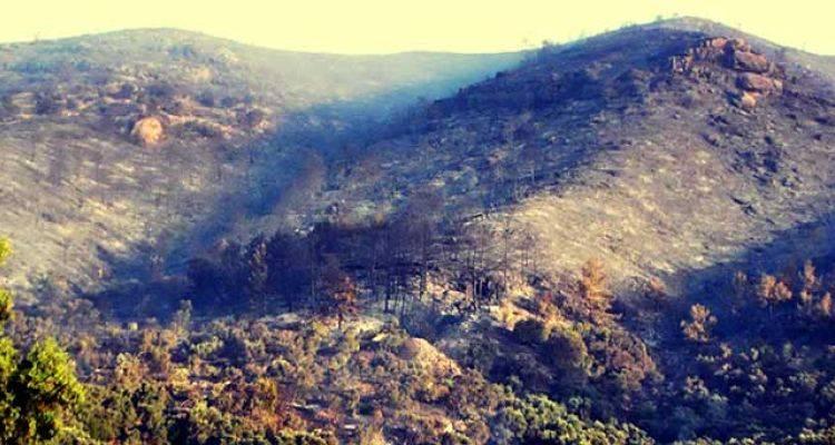 Yanan Orman Arazisine İkinci Otel İnşaatı