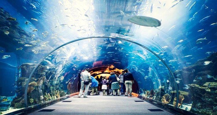 Trabzon Tünel Akvaryum projesinin ihalesi düzenlendi