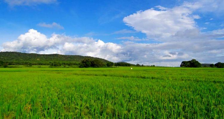 Tarım arazilerine yatırımcıların ilgisi arttı
